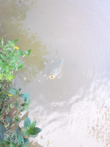 Chácara com lago para pesca e muita área verde
