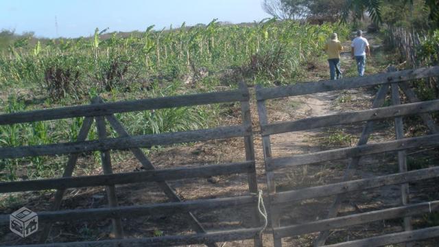 Sítio no Ceará - Fácil acesso a água e terra boa