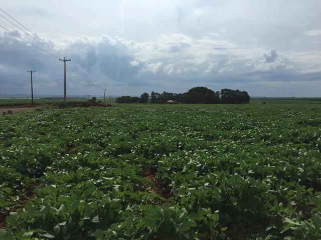 Fazendas região de londrina lindas terras