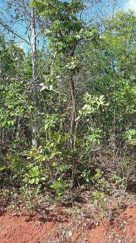 40 Hectar de terra plana em Minas Gerais